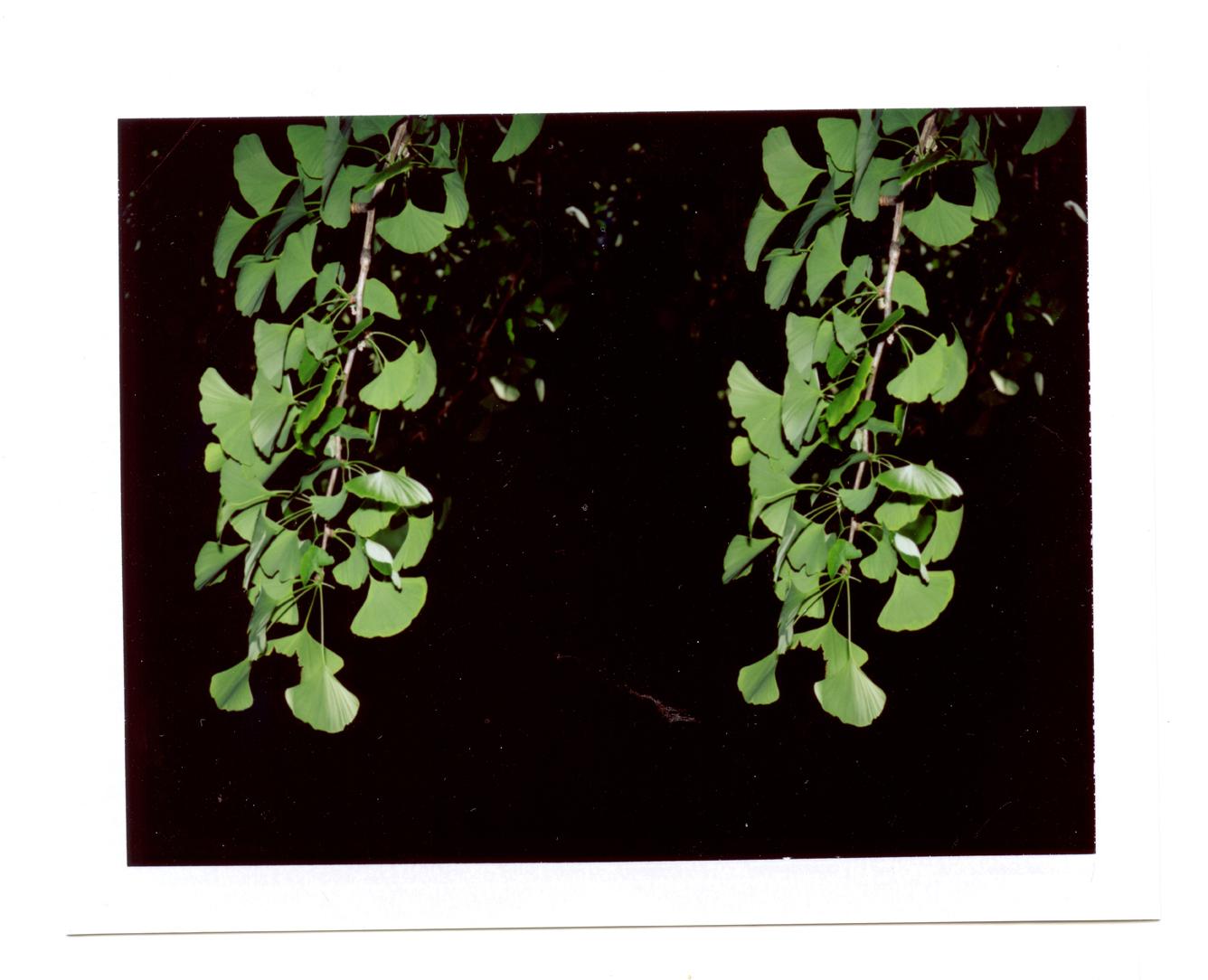 garden096lores